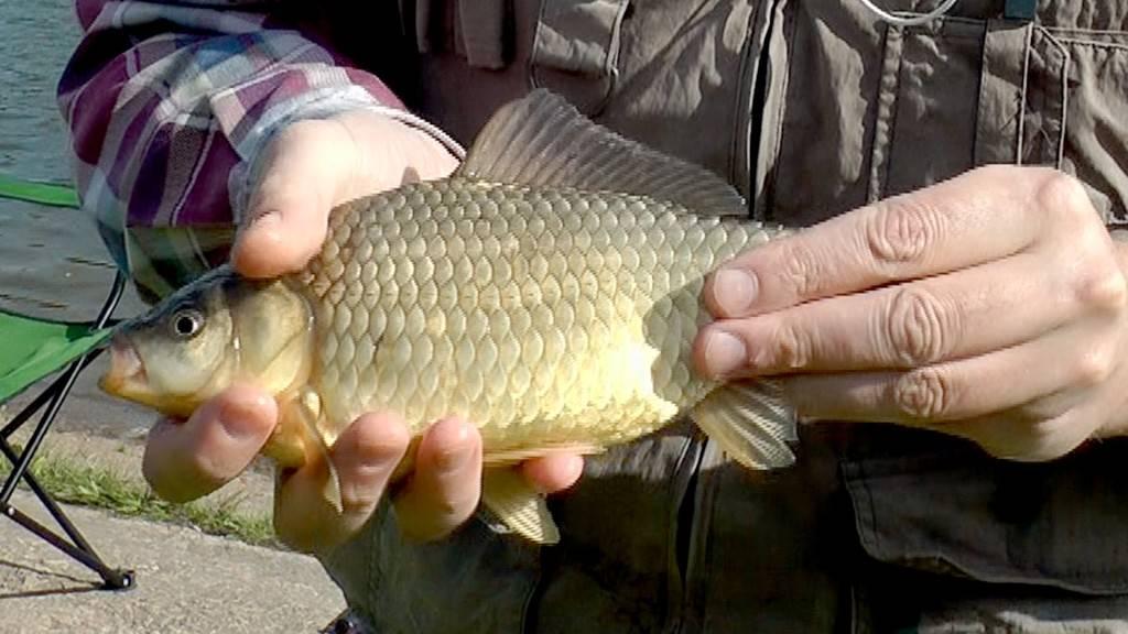 рыбалка в июне на карася